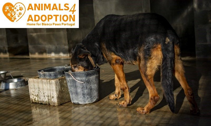 www.animals4adoption.nl